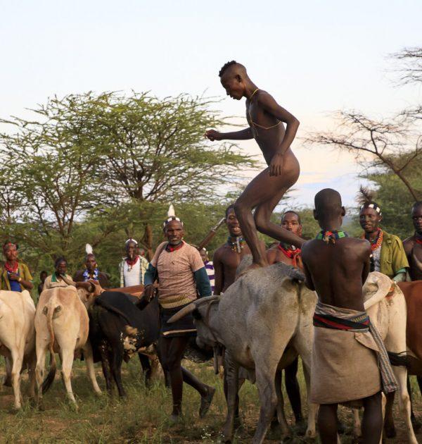hammer bull jumping